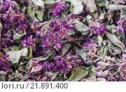 Сушёная трава душицы обыкновенной (Origanum vulgare) Стоковое фото, фотограф Алёшина Оксана / Фотобанк Лори