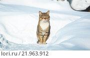 Кот на зимнем фоне. Стоковое фото, фотограф Александр Пуненко / Фотобанк Лори
