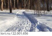Извилистый путь в зимнем лесу. Стоковое фото, фотограф Тимофеев Владимир / Фотобанк Лори