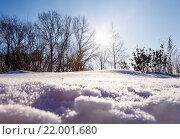 Солнце светит через деревья и снежный сугроб. Стоковое фото, фотограф Тимофеев Владимир / Фотобанк Лори