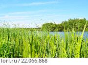 Весеннее озеро. Стоковое фото, фотограф Юрий Мартысевич / Фотобанк Лори