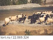 Купить «sheep in morocco landscape», фото № 22069324, снято 20 апреля 2018 г. (c) PantherMedia / Фотобанк Лори