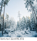 Купить «Заснеженные деревья зимой. Зимняя страна чудес», фото № 22078372, снято 18 января 2014 г. (c) Игорь Соколов / Фотобанк Лори