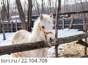 Head of a beautiful young horse at the farm. Стоковое фото, фотограф FotograFF / Фотобанк Лори