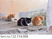 Купить «Уличные чёрный и рыжие коты на каменных ступеньках в Феодоровском городке. Город Пушкин, Санкт-Петербург», фото № 22114008, снято 6 марта 2016 г. (c) Максим Мицун / Фотобанк Лори