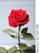 Купить «Красная роза на сером фоне», эксклюзивное фото № 22125140, снято 9 марта 2016 г. (c) Яна Королёва / Фотобанк Лори