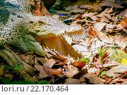 Купить «Крокодил», эксклюзивное фото № 22170464, снято 26 октября 2015 г. (c) Хайрятдинов Ринат / Фотобанк Лори