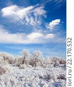 Замерзший зимний лес. Стоковое фото, фотограф Георгий Shpade / Фотобанк Лори