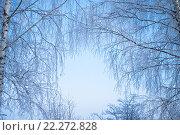 Зимние березы. Стоковое фото, фотограф Семенова Ольга Евгеньевна / Фотобанк Лори
