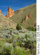 Купить «Canyon outcrops, Upper Leslie Gulch Wilderness Study Area, Leslie Gulch Area of Critical Environmental Concern, Vale District Bureau of Land Management, Oregon.», фото № 22325064, снято 5 июня 2015 г. (c) age Fotostock / Фотобанк Лори