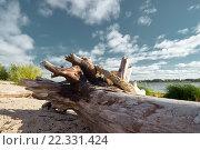 На берегу. Стоковое фото, фотограф Олег Велигданов / Фотобанк Лори
