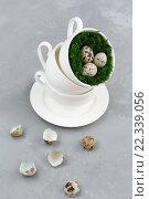 Яйца перепелиные в чашке. Стоковое фото, фотограф Козлова Анастасия / Фотобанк Лори