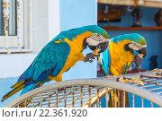 Два попугая сидят на клетке. Стоковое фото, фотограф Александр Бекишев / Фотобанк Лори