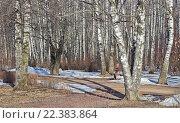 Берёзовая аллея в парке ранней весной (2016 год). Стоковое фото, фотограф Анатолий Платонов / Фотобанк Лори