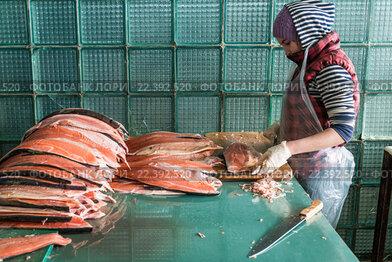 Рыбообработчик разделывает рыбу