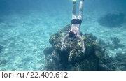 Купить «Мужчина ныряет к коралловым рифам», видеоролик № 22409612, снято 13 октября 2014 г. (c) Андрей Армягов / Фотобанк Лори