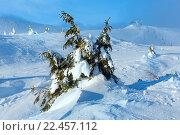 Купить «Icy snowy fir trees on winter hill.», фото № 22457112, снято 30 января 2016 г. (c) Юрий Брыкайло / Фотобанк Лори