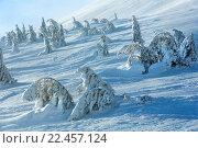 Купить «Icy snowy fir trees on winter hill.», фото № 22457124, снято 30 января 2016 г. (c) Юрий Брыкайло / Фотобанк Лори
