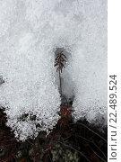 Купить «Winter in Siberia.», фото № 22489524, снято 20 июня 2018 г. (c) age Fotostock / Фотобанк Лори