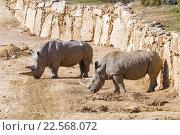 Купить «Два белых носорога», фото № 22568072, снято 29 ноября 2015 г. (c) Наталья Волкова / Фотобанк Лори