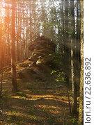Купить «Летний пейзаж - лес на восходе солнца», фото № 22636892, снято 18 августа 2009 г. (c) Зезелина Марина / Фотобанк Лори