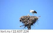 Купить «Аисты в гнезде», видеоролик № 22637224, снято 12 октября 2015 г. (c) Валерий Гусак / Фотобанк Лори