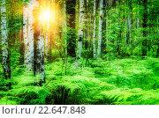 Купить «Лесной пейзаж с берёзами и папоротником», фото № 22647848, снято 19 октября 2018 г. (c) Зезелина Марина / Фотобанк Лори