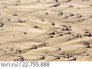 Фон из песка и разноцветной гальки. Стоковое фото, фотограф Елена Антипина / Фотобанк Лори