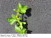Зелёное растение у серой стены в трещинах. Стоковое фото, фотограф Аня Шумкова / Фотобанк Лори
