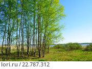Купить «Весенний пейзаж. Березовый лес на берегу реки в хороший солнечный весенний день», фото № 22787312, снято 5 мая 2016 г. (c) Зезелина Марина / Фотобанк Лори