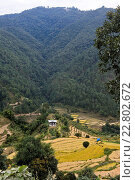 dispersed settlement in the Punakah Valley in Central Bhutan near Lobesa, Bhutan. Стоковое фото, фотограф Zoonar/Mike / easy Fotostock / Фотобанк Лори