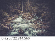 Fast mountain river in a forest, фото № 22814560, снято 25 июля 2014 г. (c) Andrejs Pidjass / Фотобанк Лори