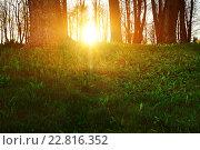 Купить «Солнечные лучи в лесу», фото № 22816352, снято 4 мая 2016 г. (c) Зезелина Марина / Фотобанк Лори