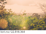 Sun shining into tropical green jungle, фото № 22818364, снято 11 ноября 2015 г. (c) Andrejs Pidjass / Фотобанк Лори