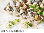 Купить «Перепелиные яйца. Весенний натюрморт», фото № 22818824, снято 30 апреля 2016 г. (c) Екатерина Тарасенкова / Фотобанк Лори