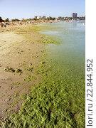 Купить «Анапа. Центральный пляж с водорослями», эксклюзивное фото № 22844952, снято 21 августа 2014 г. (c) Наталья Осипова / Фотобанк Лори