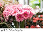 Купить «close up of pink gerbera at flower shop», фото № 22855652, снято 27 марта 2016 г. (c) Syda Productions / Фотобанк Лори
