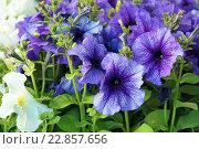 Рассада цветов. Стоковое фото, фотограф Анастасия Гамова / Фотобанк Лори