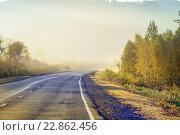 Дорога в лесу. Стоковое фото, фотограф Игорь Аникин / Фотобанк Лори