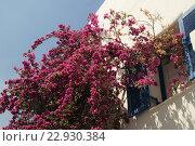 Купить «Греческий дворик», фото № 22930384, снято 20 мая 2016 г. (c) Tamara Sushko / Фотобанк Лори