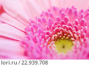 Купить «close up of beautiful pink gerbera flower», фото № 22939708, снято 27 марта 2016 г. (c) Syda Productions / Фотобанк Лори