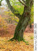 Купить «Urwald Sababurg in Hessen», фото № 22981560, снято 15 июля 2020 г. (c) age Fotostock / Фотобанк Лори
