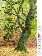 Купить «Urwald Sababurg in Hessen», фото № 22981568, снято 15 июля 2020 г. (c) age Fotostock / Фотобанк Лори