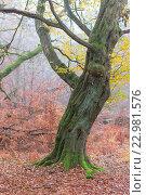 Купить «Urwald Sababurg in Hessen», фото № 22981576, снято 15 июля 2020 г. (c) age Fotostock / Фотобанк Лори