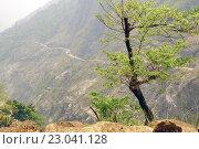 Дерево на краю горного обрыва. Стоковое фото, фотограф Иван Прокопович / Фотобанк Лори