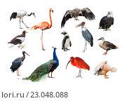 Купить «Коллаж из птиц разных континентов», фото № 23048088, снято 28 ноября 2015 г. (c) Наталья Волкова / Фотобанк Лори