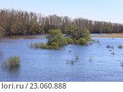 Ивы затоплены. Стоковое фото, фотограф Анатолий Матвейчук / Фотобанк Лори