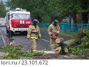 Купить «Сотрудники МЧС распиливаю ствол рухнувшего на проезжую часть старого дерева. Санкт-Петербург», фото № 23101672, снято 16 июня 2016 г. (c) Виктор Карасев / Фотобанк Лори
