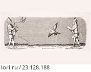 How to Train a New Falcon. 19th century reproduction of miniature in 14th century manuscript of Livre du Roy Modus. Редакционное фото, фотограф Classic Vision / age Fotostock / Фотобанк Лори