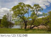 Озеро в лесу. Стоковое фото, фотограф Сергей Панкин / Фотобанк Лори